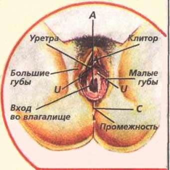 sluchaynie-eroticheskie-kadri-znamenitostey